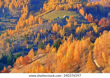 Colorful trees on sunny hill during autumn, Bran, Romania
