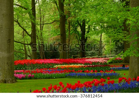 Colorful  trees with green grass and spring flowers  in holland park Keukenhof, Netherlands - stock photo