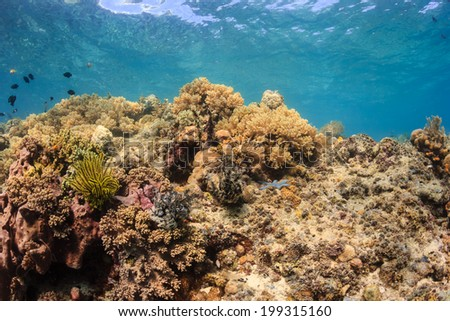 Colorful tropical coral reef - stock photo