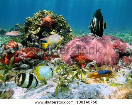 Colorful tropical fish and corals with starfish in the Caribbean sea - stock photo