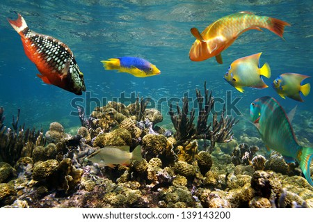 Colorful tropical fish underwater over Caribbean coral reef - stock photo