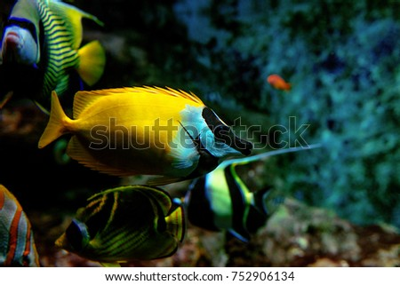 Colorful tropical fishes and coralls underwater in the aquarium