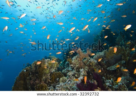 Colorful tropical reef, Red Sea, Egypt