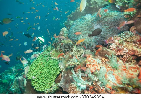 Colorful Tropical Reef Scene - stock photo