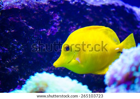 colorful tropical sea fish