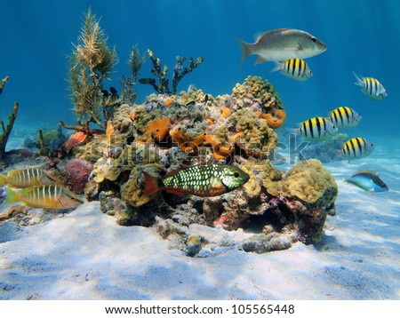 Colorful tropical sea life under water in the Caribbean with fish, coral and sponge - stock photo