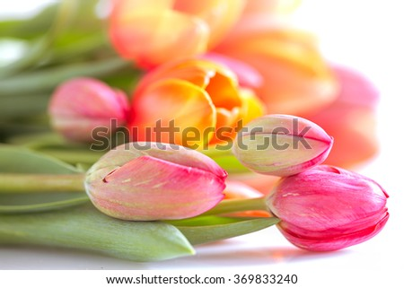 Colorful tulip bouquet on white background - stock photo