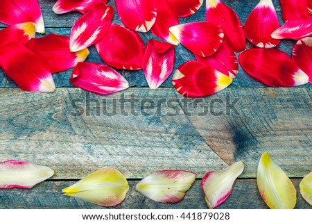 Colorful tulip flower petals on blue wooden background