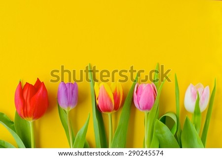 Colorful Tulip Flowers on Yellow Background