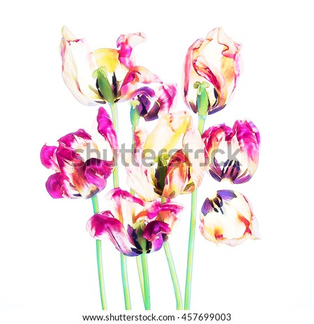 Colorful tulips and petals