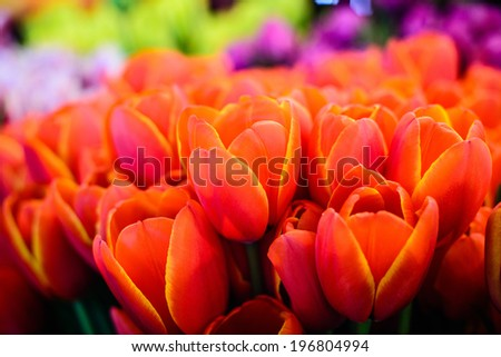 Colorful Tulips at the Pike's Place Farmers Market in Seattle, Washington, USA. - stock photo