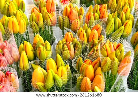 colorful tulips in a row - stock photo