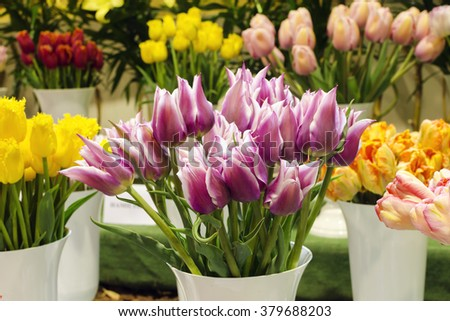 Colorful tulips in vase at market or in a florist shop.