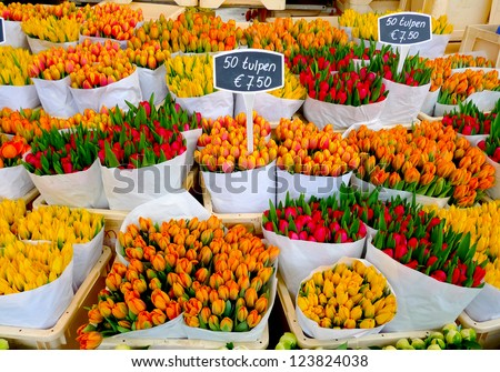 Colorful tulips on sale in Amsterdam flower market - stock photo