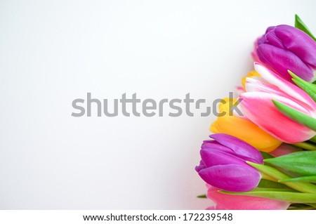 Colorful tulips on white background - stock photo