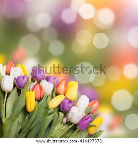 Colorful tulips over blur bokeh background for design
