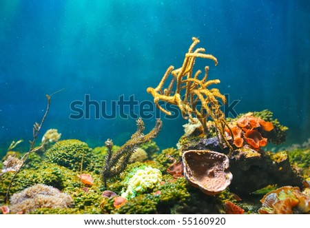 Colorful underwater