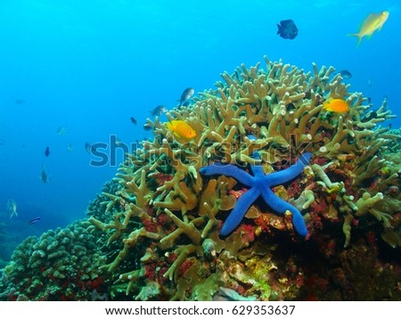 Colorful underwater coral reef with blue sea star, starfish. Various fish in the azure ocean, scuba diving activity picture.