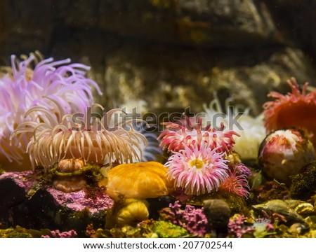 Colorful underwater flora in aquarium - stock photo