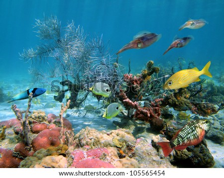 Colorful underwater life with tropical fish and caribbean reef squids in a coral reef - stock photo