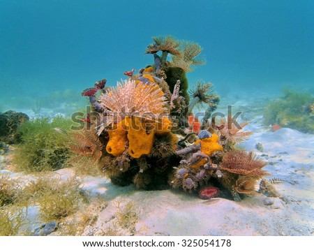 Colorful underwater marine life composed by tube worms and sea sponges on the seabed, Caribbean sea - stock photo