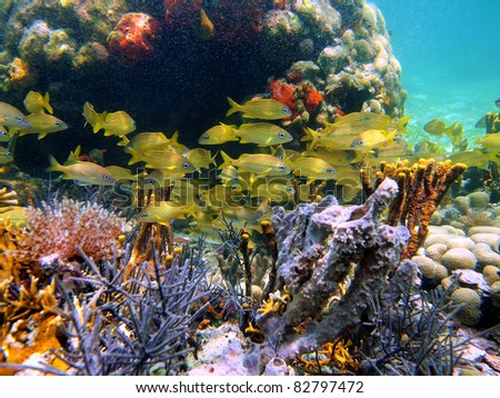 Colorful underwater marine life with a shoal of french grunt fish in a coral reef, Caribbean sea, Bocas del Toro, Panama - stock photo