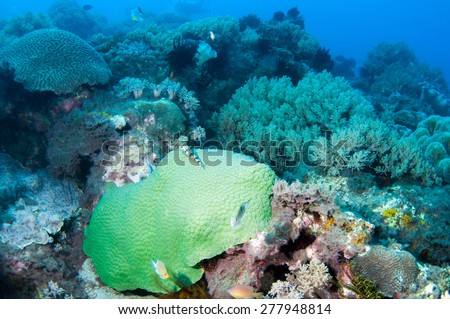 Colorful underwater scene - stock photo