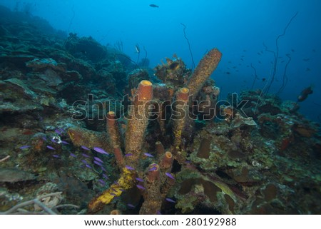 Colorful underwater tropical coral in the Caribbean