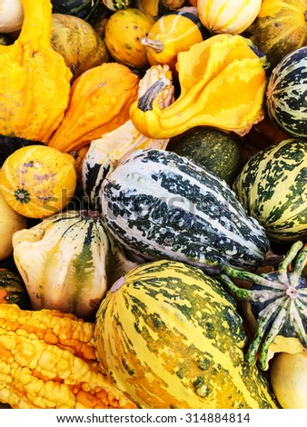 Colorful variety of gourds at the autumn market. - stock photo