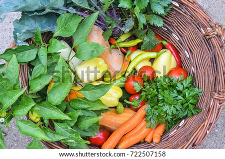 Colorful vegetables in the wicker basket