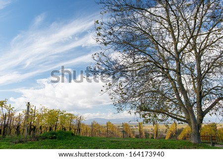 Colorful Vineyard Landscape in Autumn With Blue Sky - stock photo