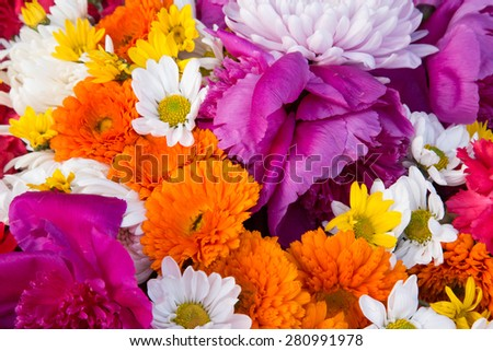 Colorful vivid color flowers wall.  - stock photo