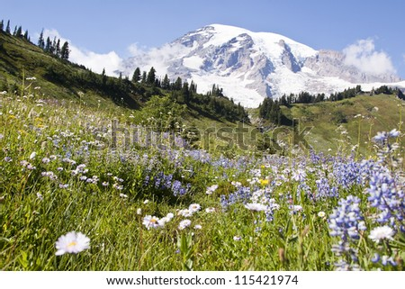 colorful wildflowers in national park mount Rainier - stock photo