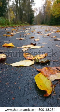 Colorful willow leaves on wet asphalt sidewalk on a cloudy autumn weather. Vertical close up landscape taken at street level in Finland, Northern Europe