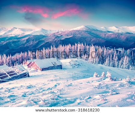 Colorful winter morning in the Carpathian mountains. Glade Pozharska, Carpathian, Ukraine, Europe. - stock photo