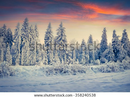 Colorful winter sunrise in the Carpathian mountain forest. Tranquil moment woodland after heavy snowfall. Instagram toning. - stock photo