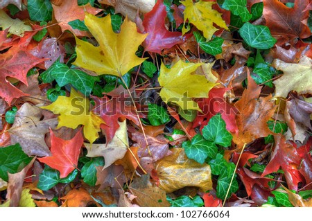 Colorfull leaves carpet surprised after rain. - stock photo