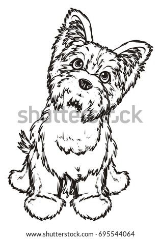 coloring cute Yorkshire terrier