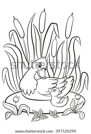 Coloring Pages Kind Duck And Little Cute Duckling Swim On The Pond Smile