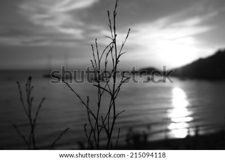 Colorless Ibiza sunset - stock photo