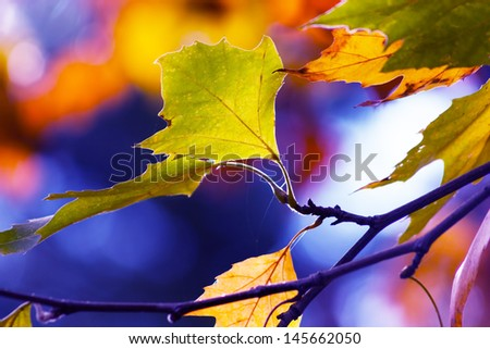 Colors of Autumn  - stock photo