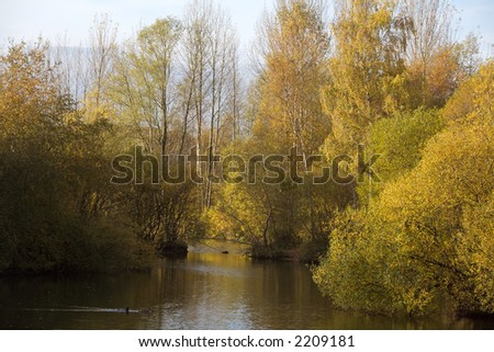 Colors of Autumn by a pond