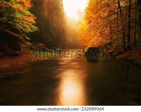 Colors of  autumn mountain river. Colorful gravel with leaves, leaves trees bended above river. - stock photo