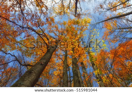 Colors of the forest in autumn in Tuscany,Italy