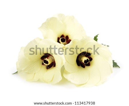 Colors okra /Abelmoschus esculentus/ - stock photo