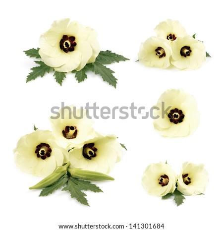 Colors okra /Abelmoschus esculentus/ isolated on white background  - stock photo