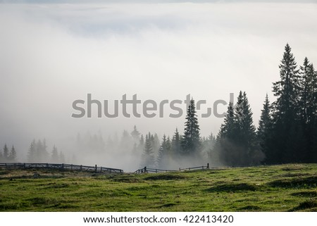Colour picture of trees on a mountain on a foggy morning at sunrise - stock photo
