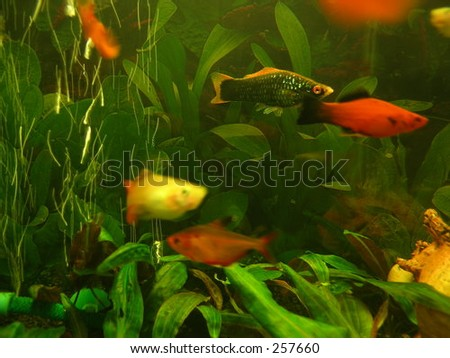 coloured fishes
