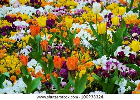 COLOURED FLOWERS - stock photo