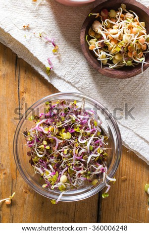 Colourful and healthy crunchy bean sprouts and China rose sprouts. - stock photo